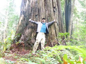 Me in front of an old-growth redwood tree.  As the trees age, their fibrous reddish bark withers away.  You can tell an old growth redwood not only by its size, but by its grey color.